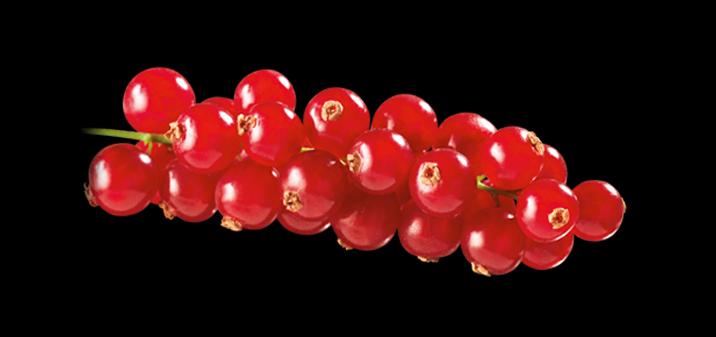 Onze Bloedbessen staan bekend om hun buitengewone kwaliteit.